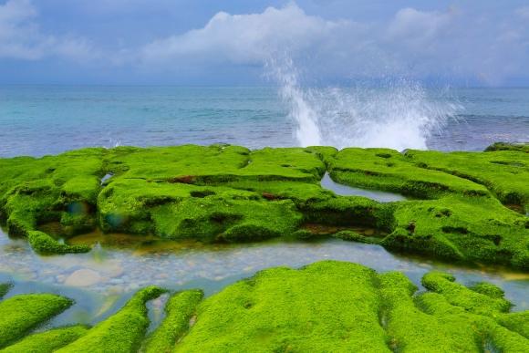 16老梅石槽碧綠的精靈