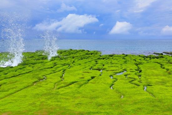 6老梅石槽  碧綠的精靈