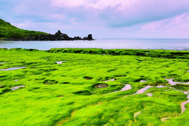 17老梅石槽  碧綠的精靈