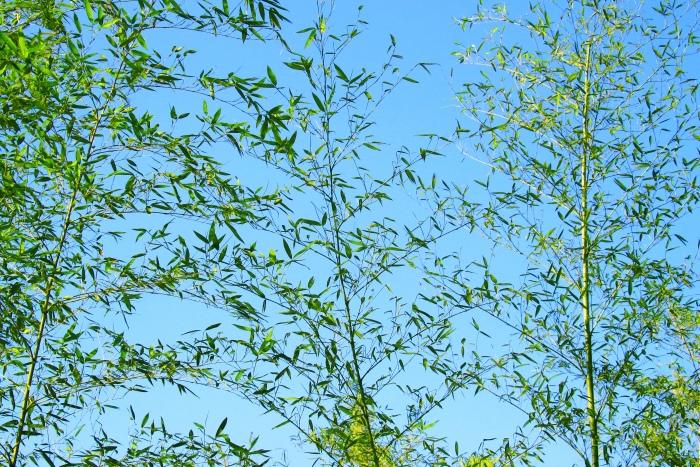 10竹林風韻之美