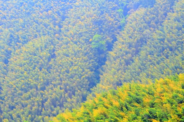 12竹林風韻之美