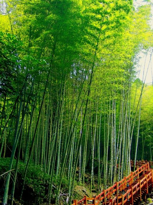 15竹林風韻之美