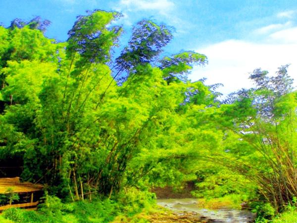 13竹林風韻之美