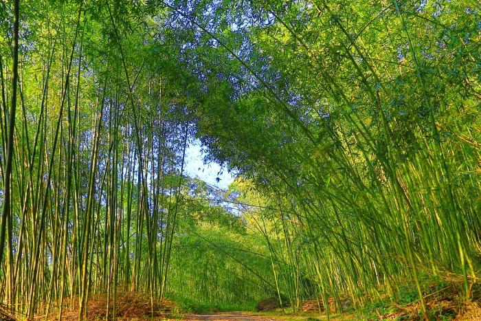 11竹林風韻之美