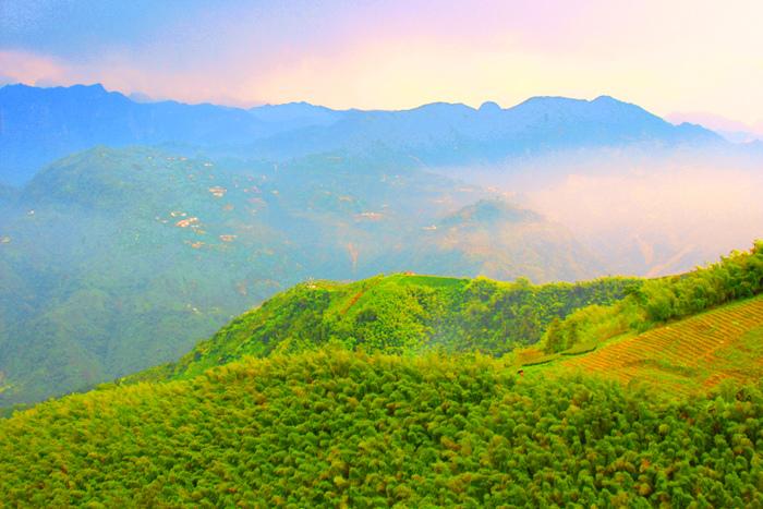 17竹林風韻之美