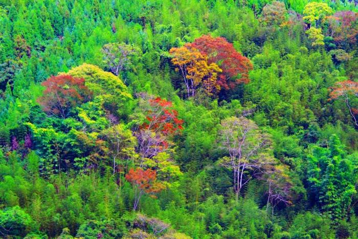 11對台灣山水美的情懷