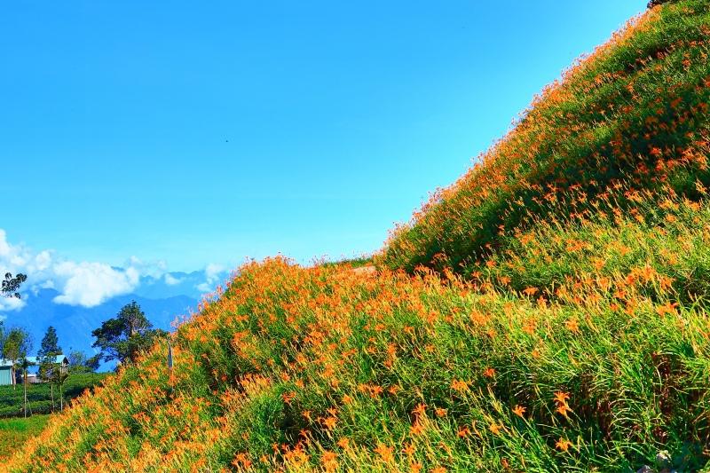 8花蓮赤柯山之美