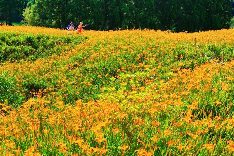 14花蓮赤柯山之美