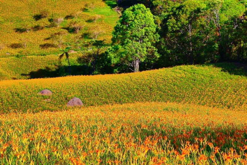 24花蓮赤柯山之美
