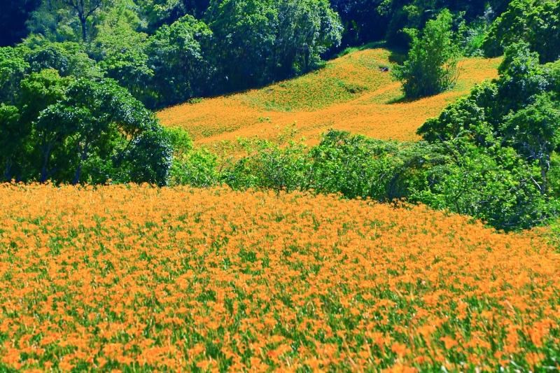 29花蓮赤柯山之美