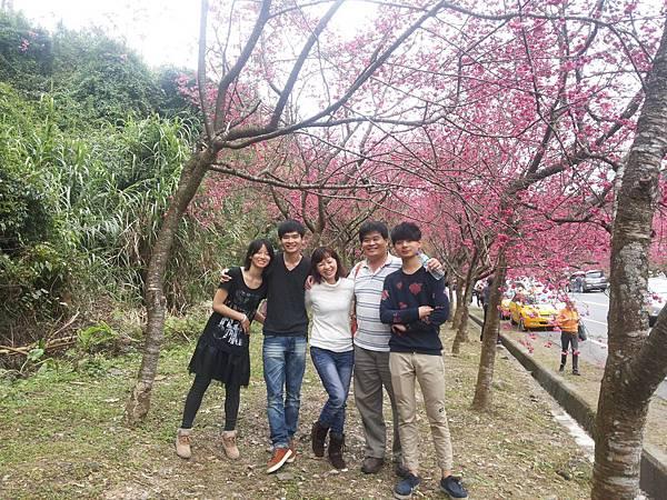 三星鄉的櫻花