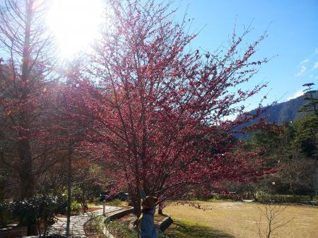 櫻花季一.jpg
