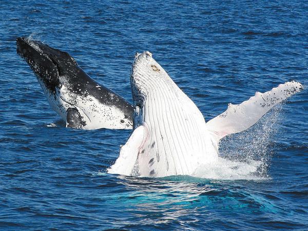 賞鯨豚 (2)
