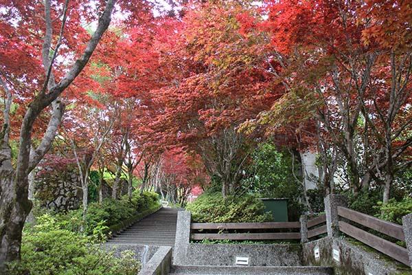 太平山的楓紅