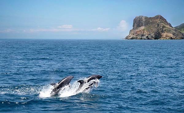 龜山岛賞鲸