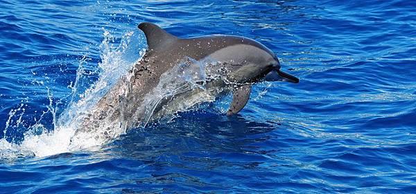 吻飛旋原海豚2
