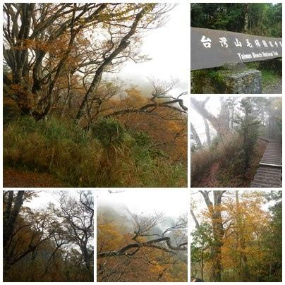 太平山包車旅遊-山毛櫸步道