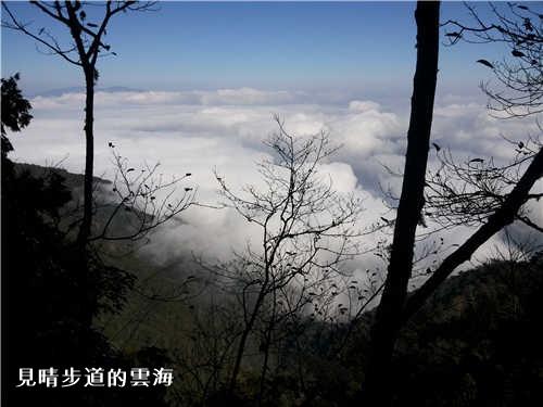 見晴步道的雲海