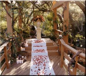 Wedding site: under the canopy
