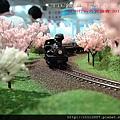阿里山小火車 與 櫻花樹林