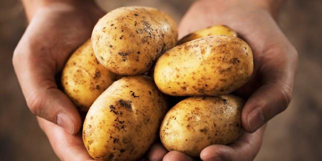 potato-644x322.jpg