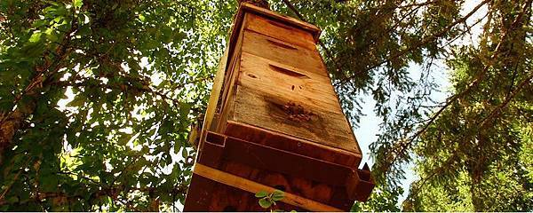 Tree hive.jpg