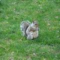 松鼠好多又好大啊!簡直就跟雞一樣大隻!