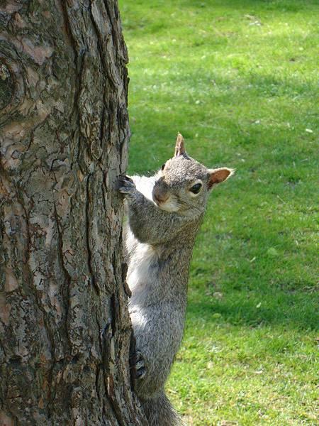 很稀奇啊~這兒的松鼠會看鏡頭還會擺POSE