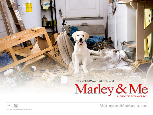 Marley_and_Me_Wallpaper_4_800.jpg