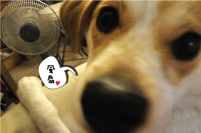 fan_love-01.jpg