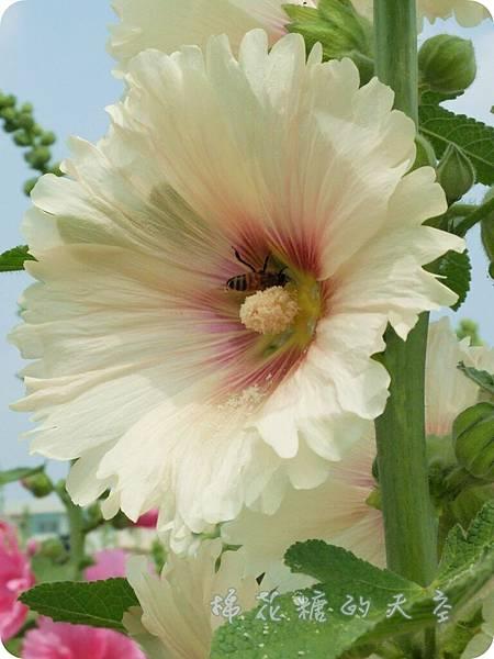 00小蜜蜂2.JPG