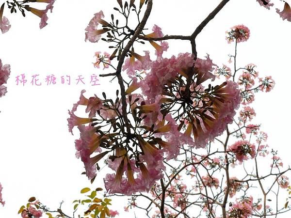 00花與天空2.JPG