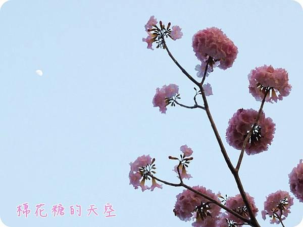 00花與天空.JPG