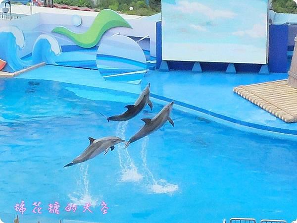 00海豚2.JPG
