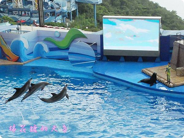 00海豚4.JPG