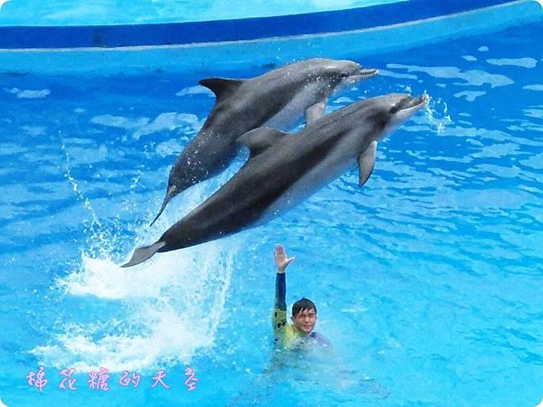 00海豚6.JPG