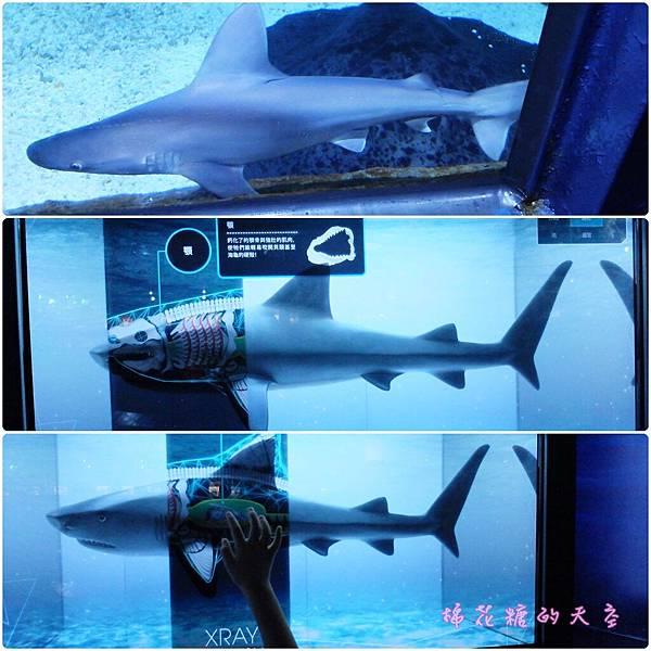 00鯊魚館3.jpg