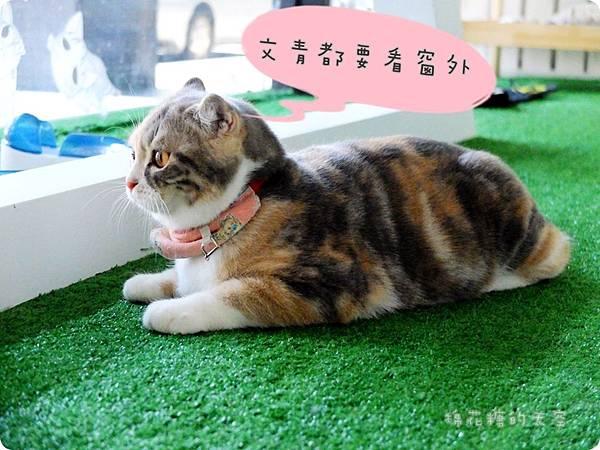 00店貓9.JPG