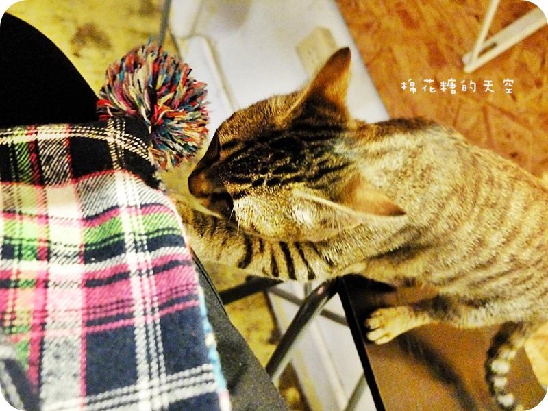 01店貓2.JPG
