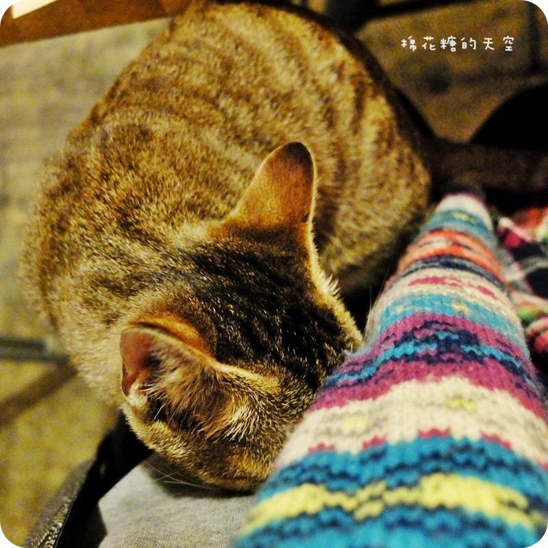 01店貓3.JPG