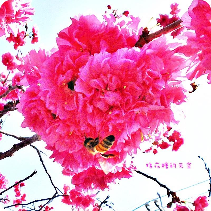 0111小蜜蜂.JPG