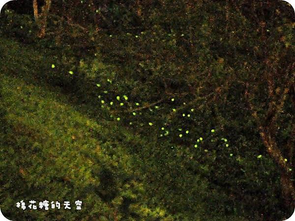 01螢火蟲3.jpg