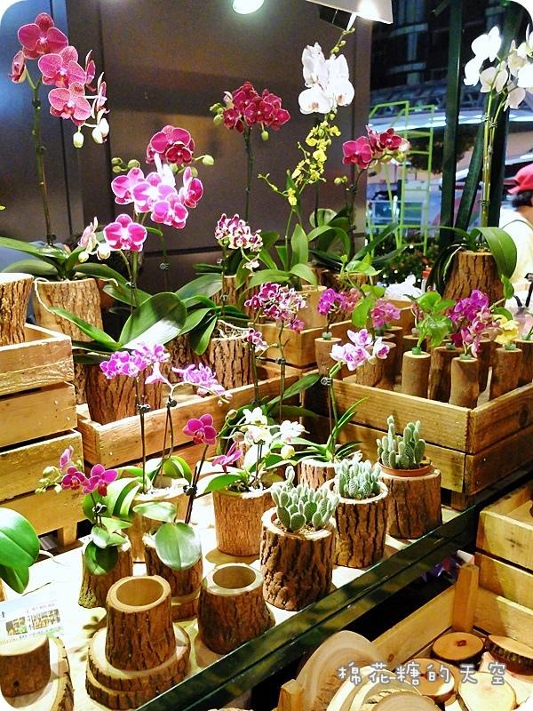 1469347982 1245343678 - 《台中購物》金典農夫市集發現亮點!原木製作各式盆栽~美麗蘭花、小巧多肉都有美美的家囉!