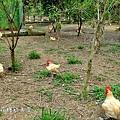 農場2.JPG