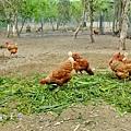 農場3.JPG