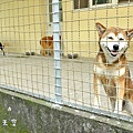 農場狗狗.JPG