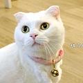 店貓小白.JPG