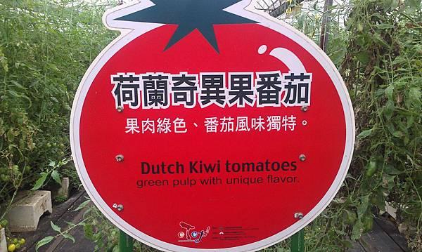 荷蘭~奇異果番茄