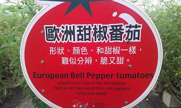 歐洲~甜椒番茄