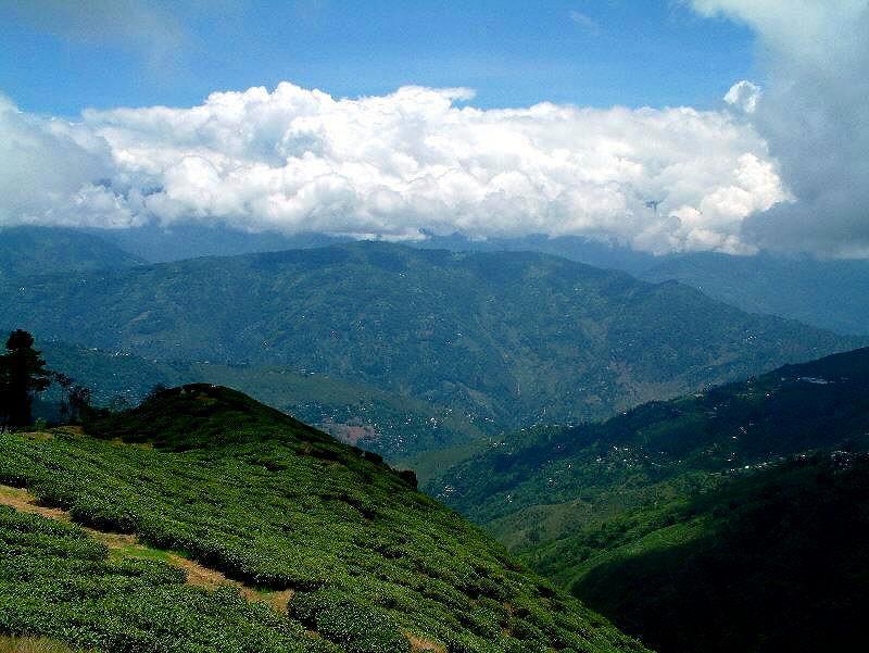 darjeeling_teafields8